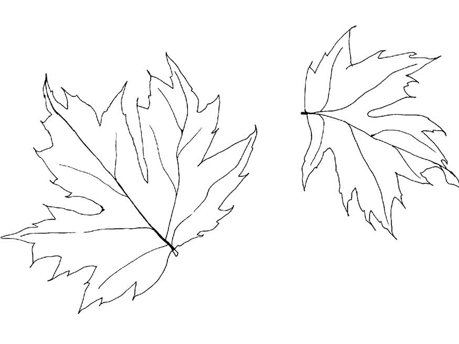 Coloring The leaves of trees maple leaves to print
