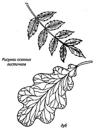 Coloring The leaves of trees leaves coloring pages