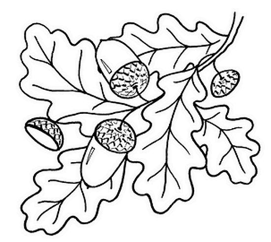 Розмальовки гілка дуб і жолуді