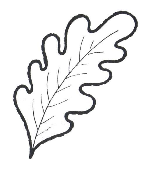 Розмальовки дуб лист дуба