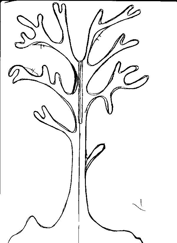Розмальовки Дерева без листя шаблон для аплікації дерево