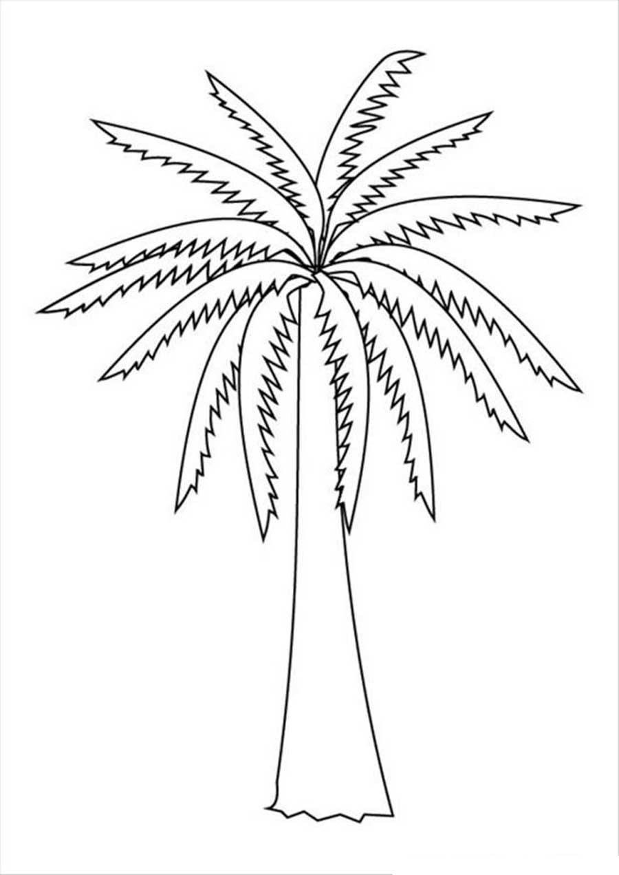 Розмальовки Дерева без листя пальма