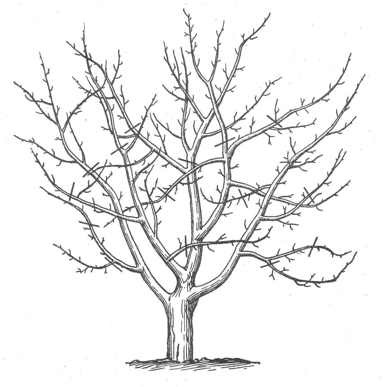 Розмальовки Дерева без листя дерево без листя