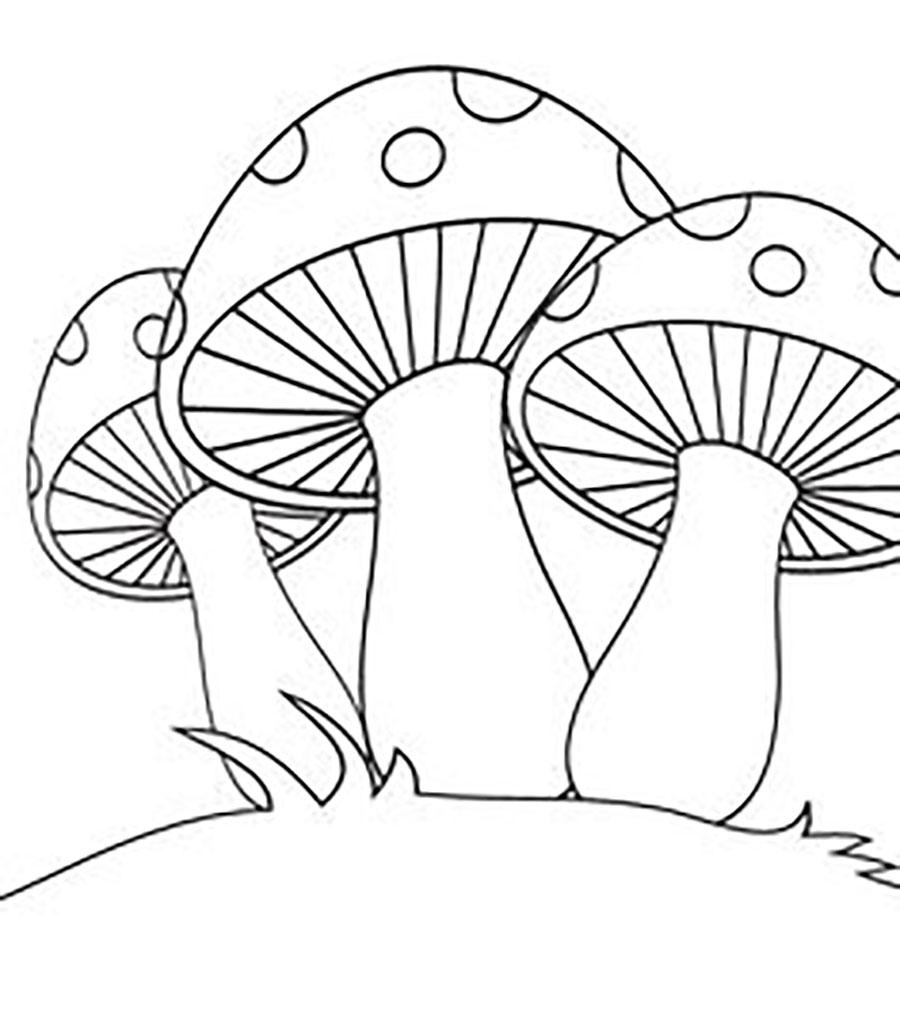 Coloring Pattern fungus Three mushrooms pattern to cut paper
