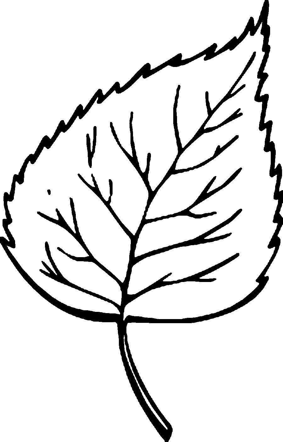 Раскраски лист шаблон листа березы