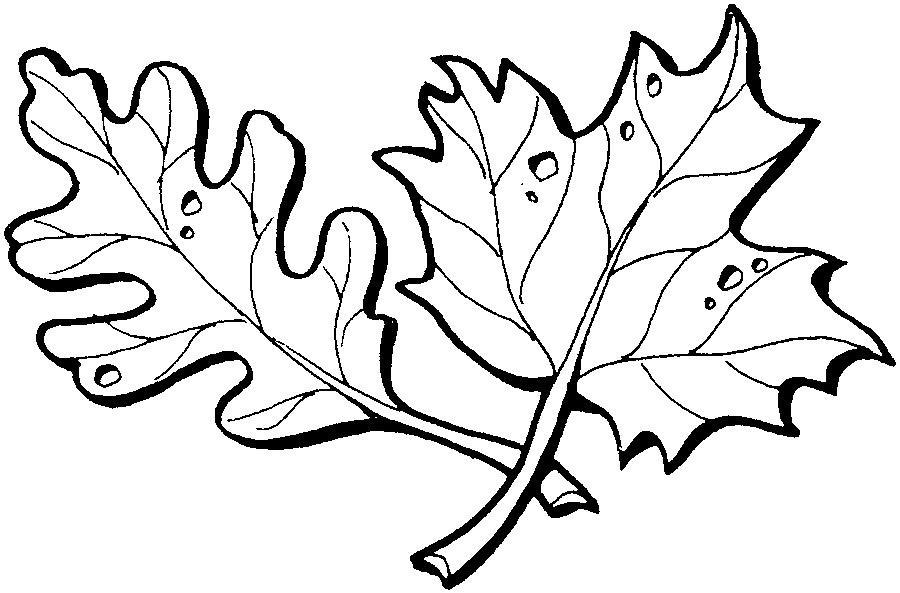 Розмальовки дуб красиві осіннє листя