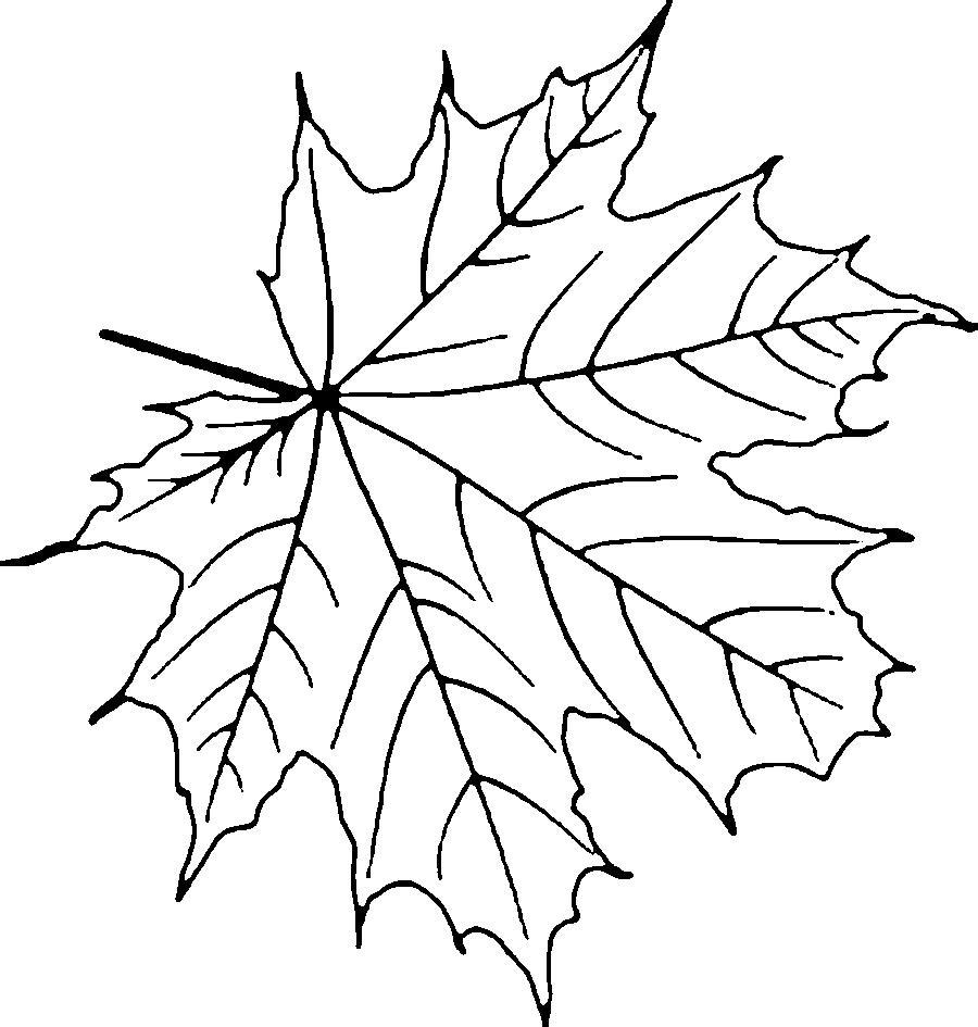 Листья деревьев Раскраски распечатать бесплатно.