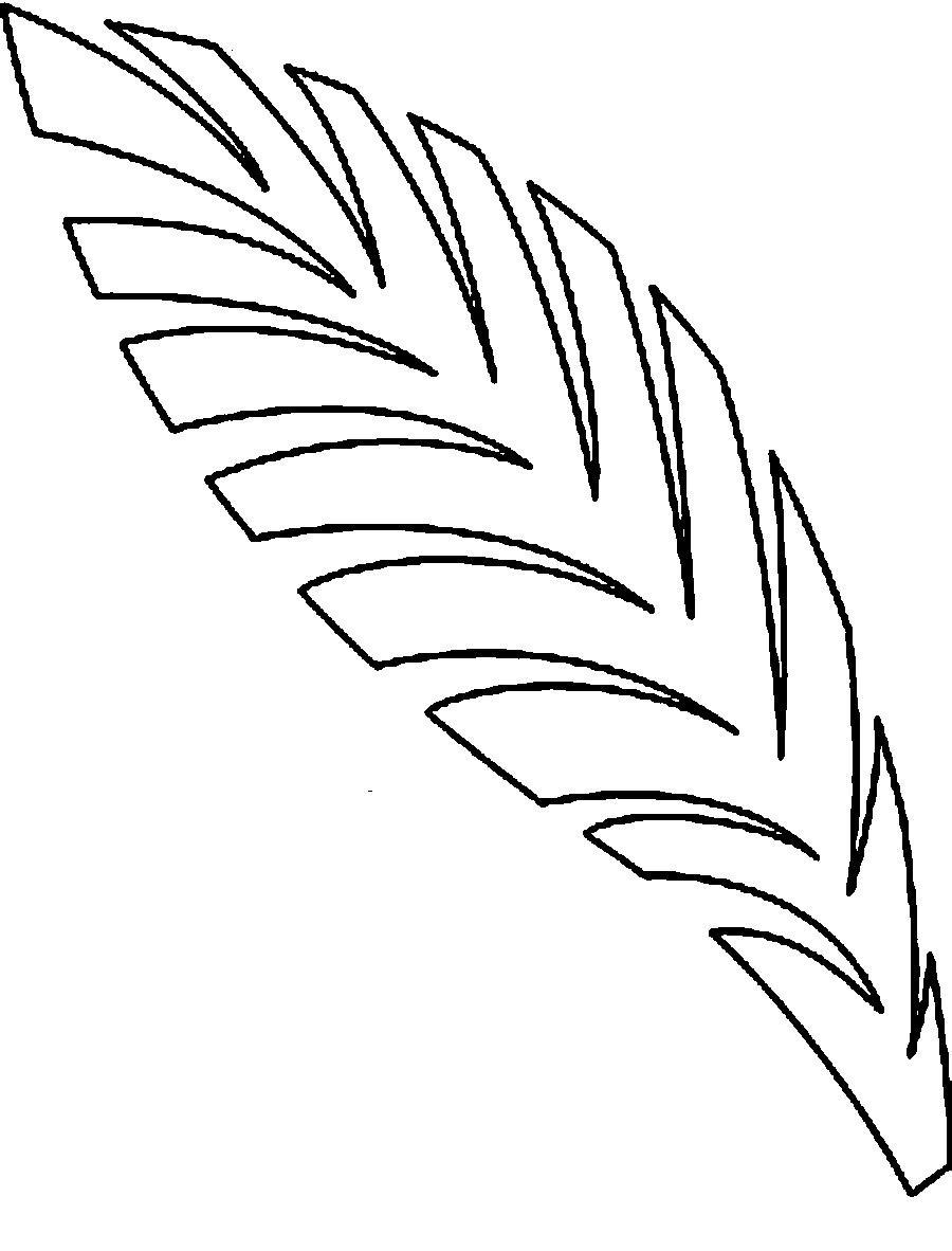 Раскраски пальмы лист пальмы контур