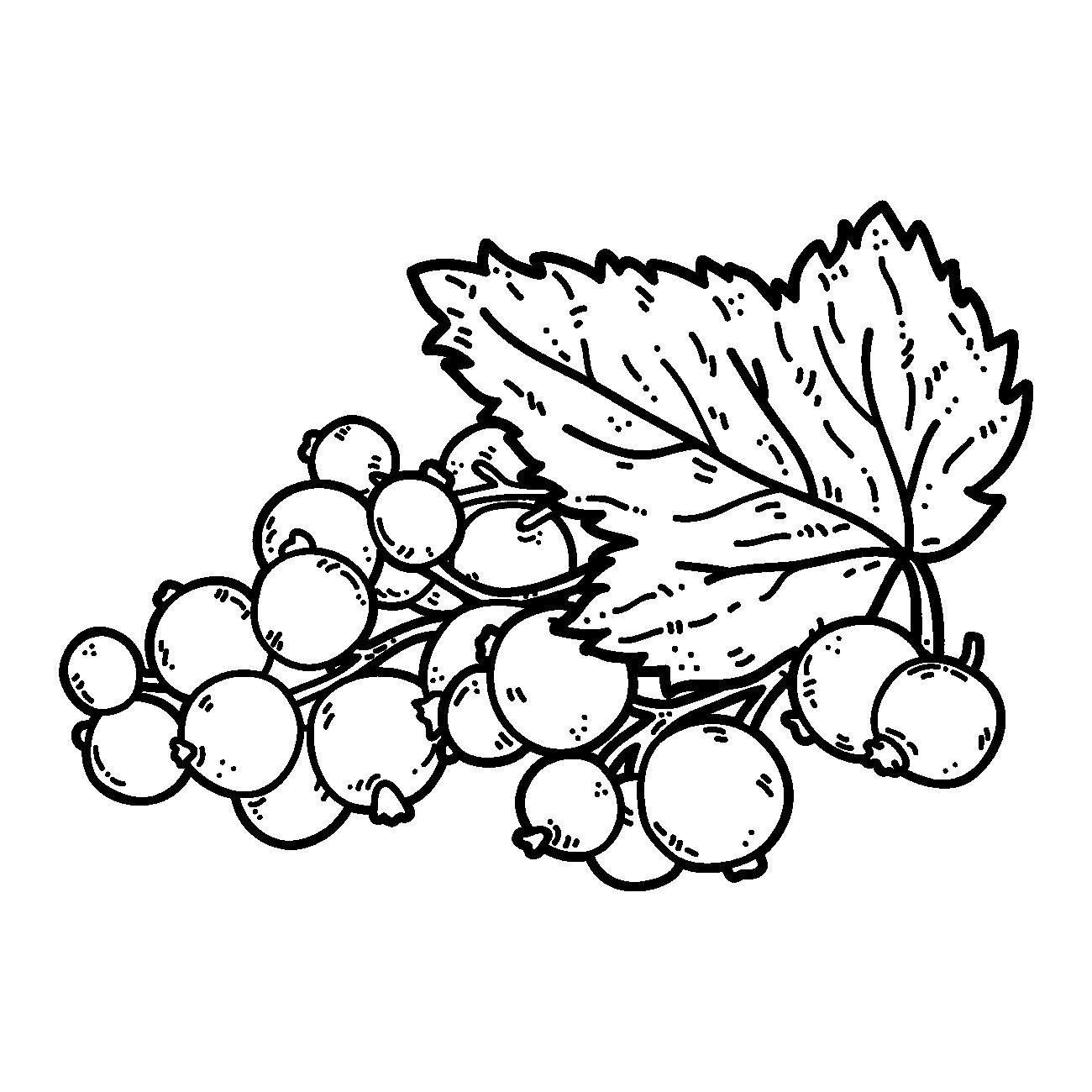 Coloring Pattern berries berries loop, currants pattern to cut paper