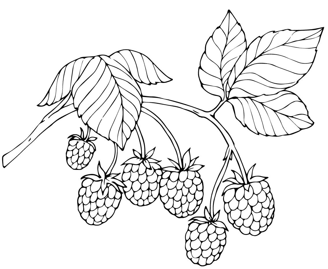 Coloring Pattern berries Raspberry circuit berry pattern to cut paper