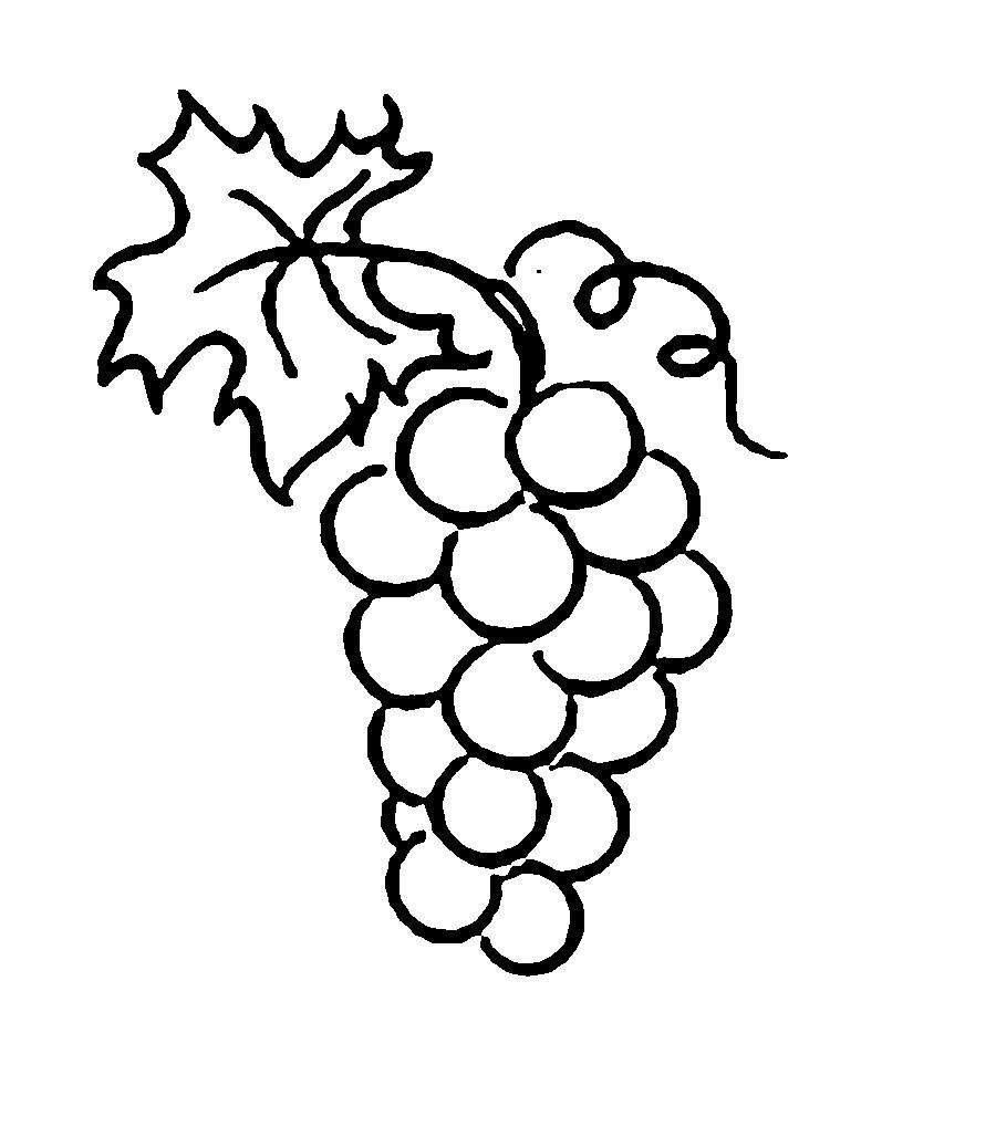 Розмальовки виноград виноград контур, ягоди трафарет для вирізання з паперу