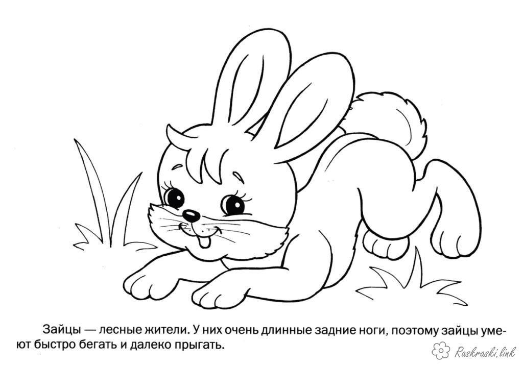 Раскраски природа Раскраска зайчик, зайцы, дикие животные, раскраски детские, простые раскраски