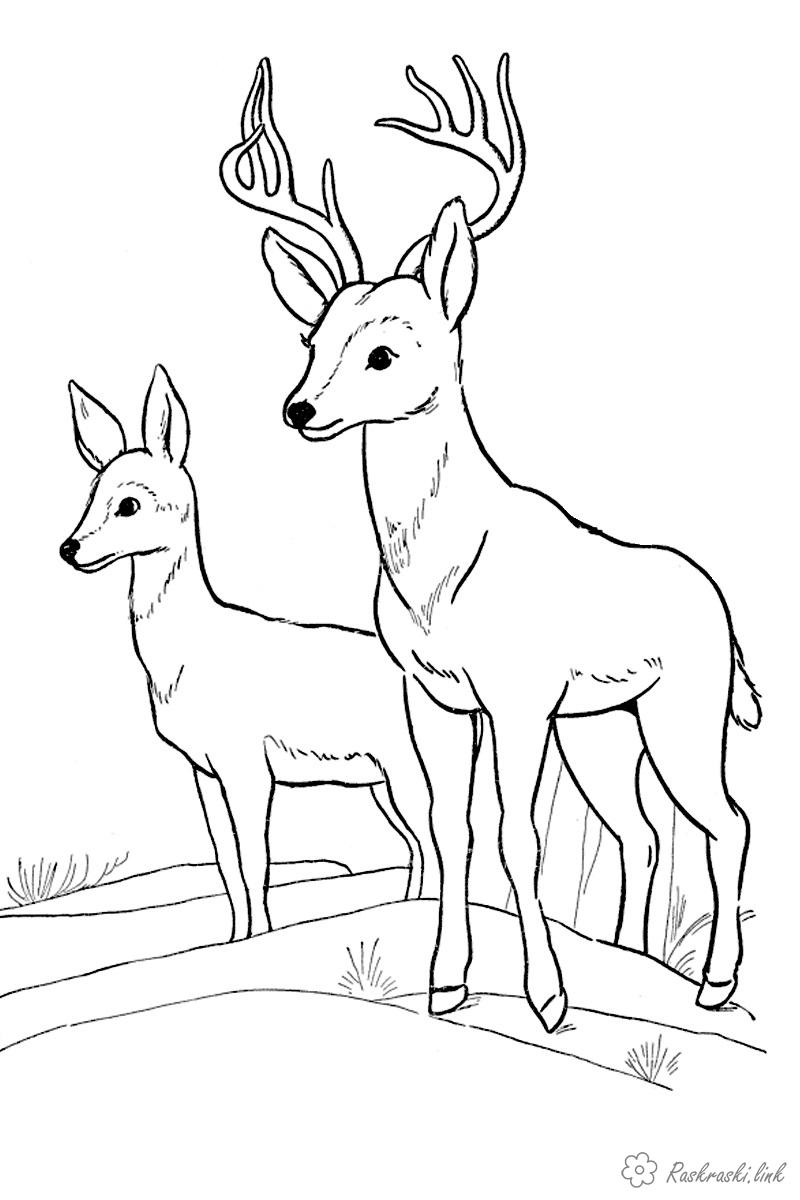 Coloring Forest animals coloring pages animals, forest animals, wild animals, coloring pages deer, deer, deer, two reindeer antlers