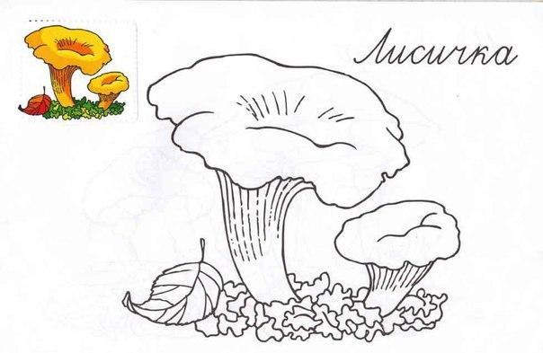 грибы Раскраски распечатать бесплатно.