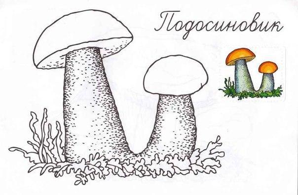 гриб Раскраски распечатать бесплатно.